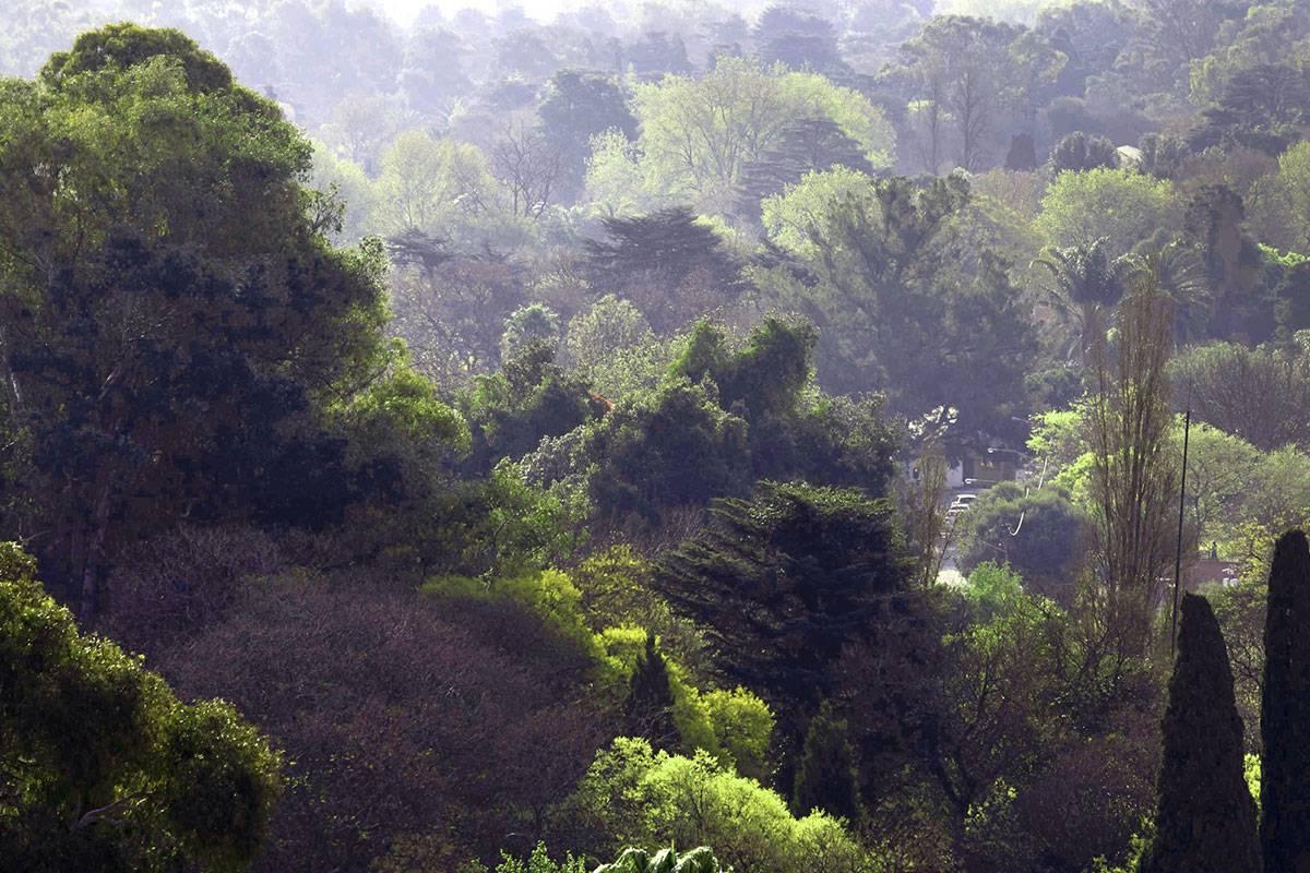 Forêt urbaine de Johhanesburg